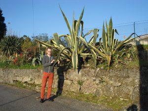 nagy növény